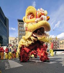 Chinese New Year NYC - Dragon Dance (Bob Jagendorf) Tags: china nyc chinatown chinese chinesenewyear parade 2008 rate jagendorf