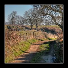 Hambledon..17 Feb 2008 (strussler) Tags: trees winter england canon eos countryside track sigma surrey trail fields 5d footpath soe hdr hambledon 3xp photomatix tonemapped