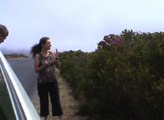 Cristel in de wind