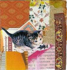 Kitten collage I