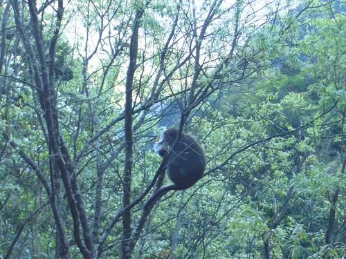 這隻猴子從遊客的背包偷了1包零食