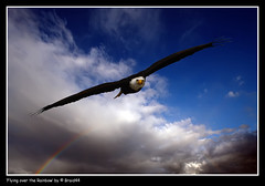 Flying over the Rainbow ( Pere Soler) Tags: wild bird nature scary rainbow bravo eagle bald free american aguila naturesfinest calva firstquality cimdaligues supershot allrightsreserved mywinners anawesomeshot impressedbeauty megashot braid44 betterthangood proudshopper peresoler