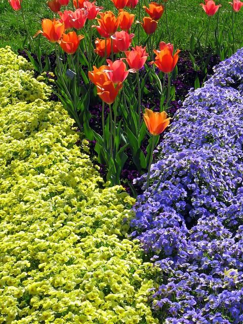 Cheekwood 10: Color Garden