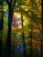 autumn forest (the-father) Tags: autumn forest germany bavaria bravo searchthebest oberpfalz weiden mywinners infinestyle goldenphotographer thegoldenmermaid mitterhoell