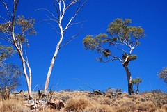 on the flanks of mount painter - link to my Arkaroola Sanctuary - would U mine it? set on flickr