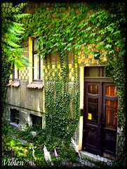house of ivy (Violen's photography) Tags: door old flowers trees building tree green beautiful grass wall architecture town gate decay entrance poland polska ivy calm mansion lovely enter entrace bielskobiala