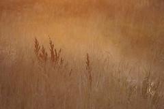 Foggy Morning (Outdoorsie @ RocksAndSun.com) Tags: morning autumn mist fall grass fog sunrise nikon colorado d70 naturesfinest