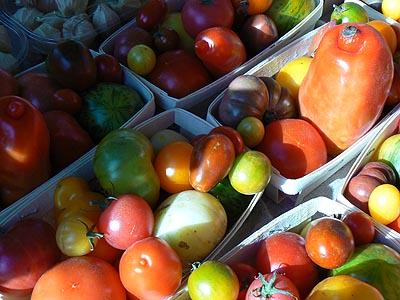 tomates gros plan.jpg