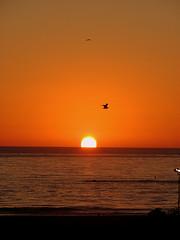 Sun melted into ocean (Andre Sa) Tags: california sunset sky usa santamonica céu pôrdosol estadosunidos instantfave canonpowershots3is