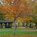 Regent's Hut: November 9th