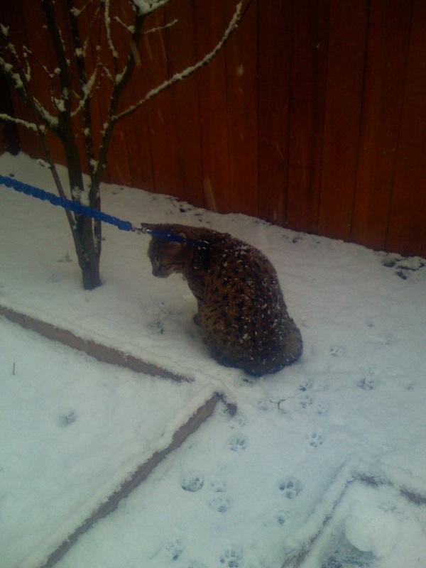 Mater Snow