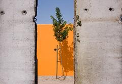(Shemer) Tags: orange tree berlin wall germany thewall shemer  shimritabraham