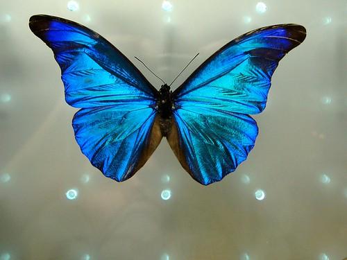 Le papillon vient après la chenille - CC by-nc-nd by Photon Q
