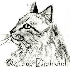 Pencil Sketch of Cats Profile (Jane (on break)) Tags: cute pencil cat sketch 07 2007 happycat tabbycat catland catart catartist catprofile catsketch longhairedtabbycat janediamond catsprofile artmewvodesigns simplepencilsketch sketchjanediamond catfaceandmane basicpencilsketch
