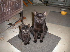 Mini and Grace, keeping an eye on things. (jp weigle) Tags: cats catspool