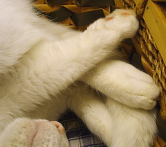 pile of paws (fermicat) Tags: sleeping cat feline basket paws zima