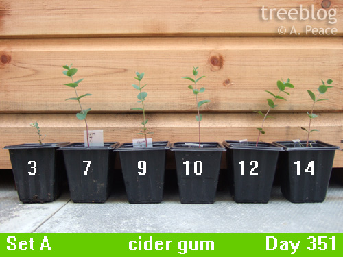 cider gums 3, 7, 9, 10, 12 and 14