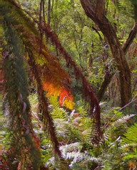 hdr rainforest walk 3