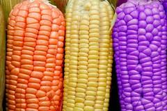Sweet-Corn (sudjuanda) Tags: orange yellow indonesia corn purple sweet violet sudjuanda peachofashot