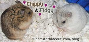 chippy & friend