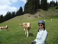 Doreen makes a friend (will_cyclist) Tags: alps cycling switzerland cows gstaad2 cowsx