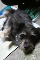 super nina! (:e:) Tags: dog abandoned cane sweet dolce e nina abbandonata doooolce nonabbandonateicani dontabandondogs
