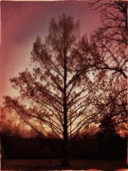 (They got the) Fire Down Below (Captain Creepy) Tags: silhouette trees sky sunset bobseger sundown winterblues blah boredwithsubarctictemperatures