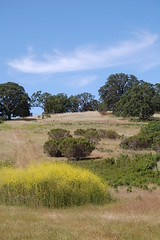 Stanford Foothills Photo