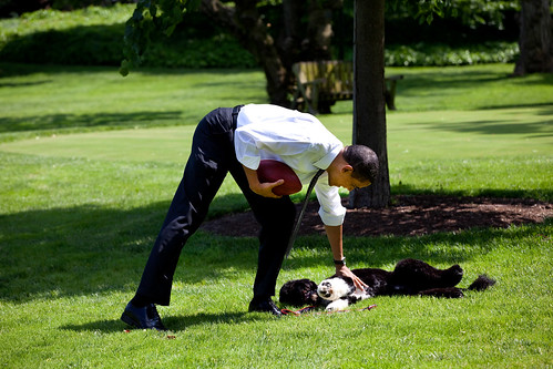 President Barack Obama pets the family dog, Bo, during a brief break from meetings.