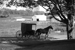 Buggy-2 (clintsprunger) Tags: ohio amish buggy amishcountry nikonnikkor50mmf14d200
