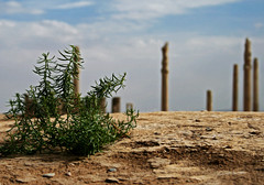 Pillars of Takht-e Jamshid (Hossein Ghodsi) Tags: green persian iran adobe shiraz iranian pillars    takhtejamshid     adobebricks persianempire  duringtheachaemeniddynasty adobestylewall