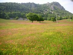...colori nei campi... (rebranca46) Tags: friends italy panorama nature landscape fiori campi villagrande abigfave rebranca carpegnapu