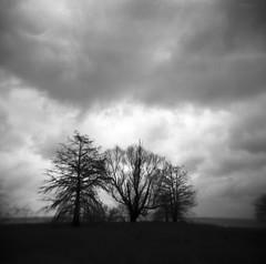 Trio (disco nap) Tags: trees blackandwhite film silhouette clouds mediumformat landscape holga adox