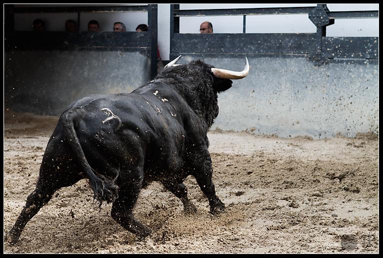Toro-de-Los-Bayones-4