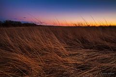 Missouri_Conservation_Landscape_Photography_Burr_Oak Woods_Sunset_Mar03_12_2014 (Tommy Brison) Tags: sunset nature field landscape photography oak woods photographer conservation missouri prairie burr bluesprings tommybrison