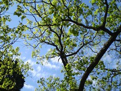 ARBOLES Y CIELO - TREES AND SKY (hmlaplata) Tags: tree bird argentina flickr arboles photos dove paloma ave fotos laplata arbos hmlaplata hmlaplatayahoocom