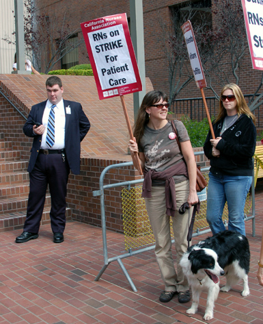2picket-pooch2.jpg