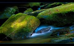 Mossy (NatureWalk) Tags: sc water rock forest moss bravo stream southcarolina twinfalls glade silky naturesfinest pickenscounty d80 flickrsbest mywinners aplusphoto eastatoeriver