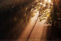 Spotlight of sunshine (tad2106 - Trudie Davidson Photography) Tags: trees shadow sun mist leaves sunshine weather wall d50 garden landscape nikond50 sunrays climate cambridgeshire rampton shaftoflight 7daysofshooting macrocloseupmonday week44light