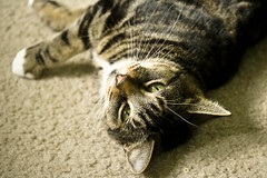Her Eyes (Amanda Music) Tags: beauty cat eyes isabelle lyingdown hereyes