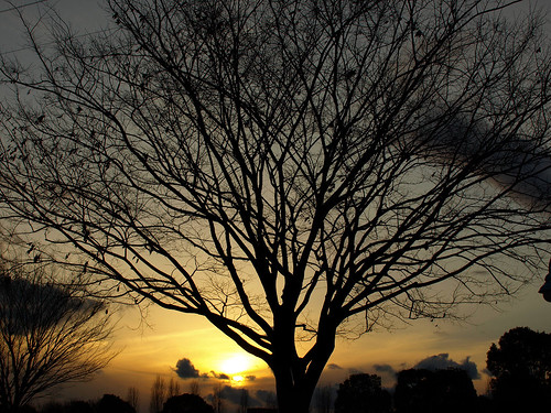 A tree and the sunset