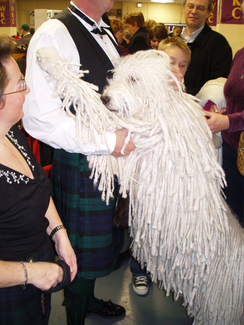dog with dreadlocks, Westminster Kennel Club Dog Show, Madison Square Garden, NYC