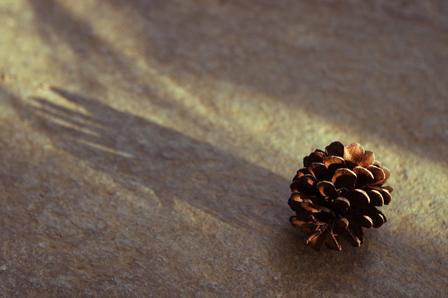 季節外れの落下物