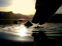 Slurp! (júlía ∆) Tags: dog lake water labrador drinking retriever mygallery meðalfellsvatn