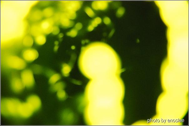 螢火蟲-03