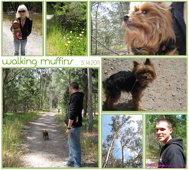 california walking muffins