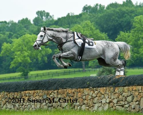 steeplechase horse