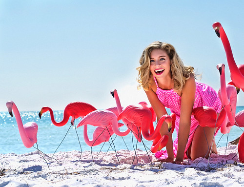 Flamingo Flamingo by Brian David Braun by Brian David Braun Photography