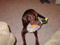 Dakota and a stuffed duck toy