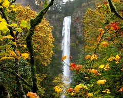 Multnomah Falls through Fall (Starlisa) Tags: autumn fall water maple falls explore multnomahfalls naturesfinest mywinners suitableforframing starlisa betterthangood meetingwithrootzz firstflickrite astunningmoment trulybetterthangood